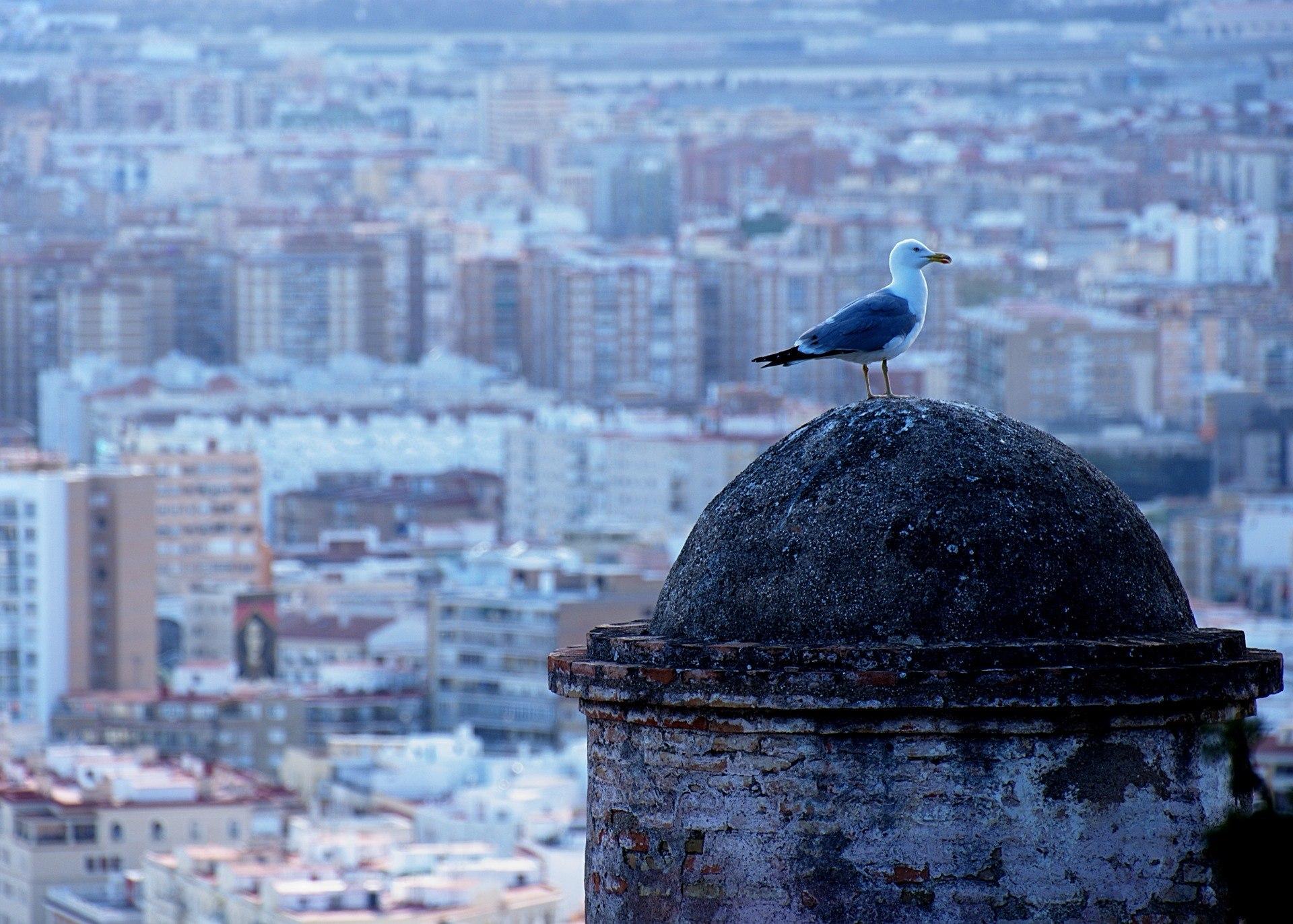 Vistas Málaga