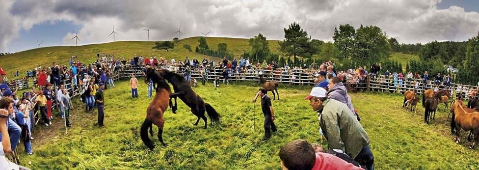 lucha caballo