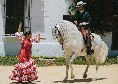 horses flamenco seville