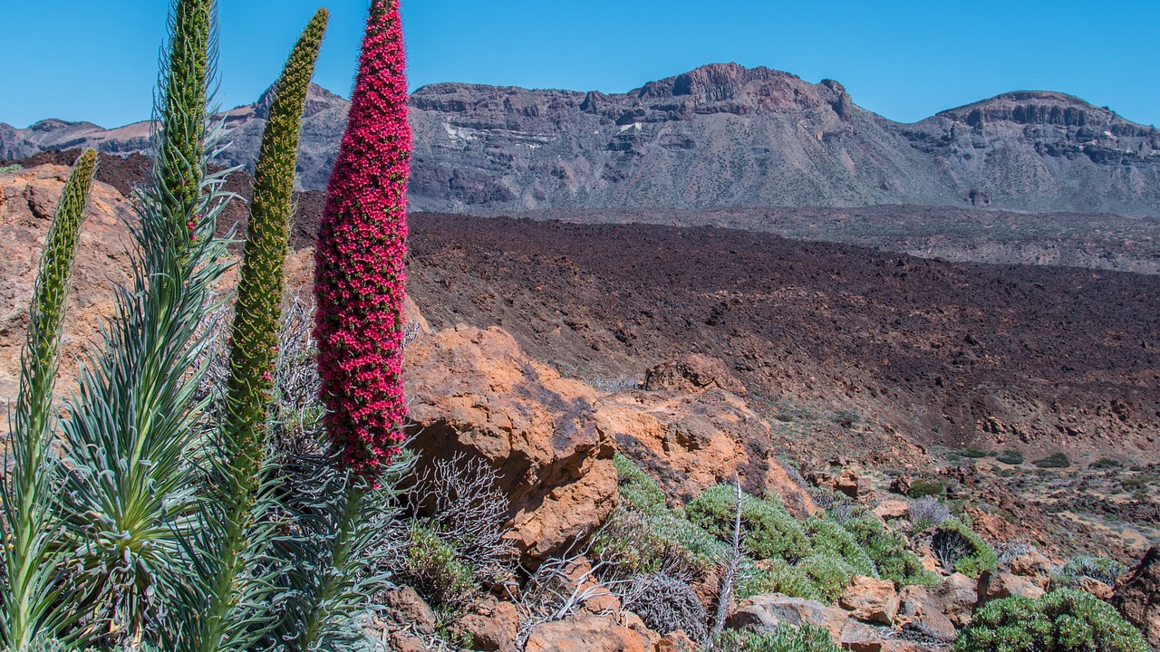 7 Reasons to put Tenerife on your bucket list - Teide
