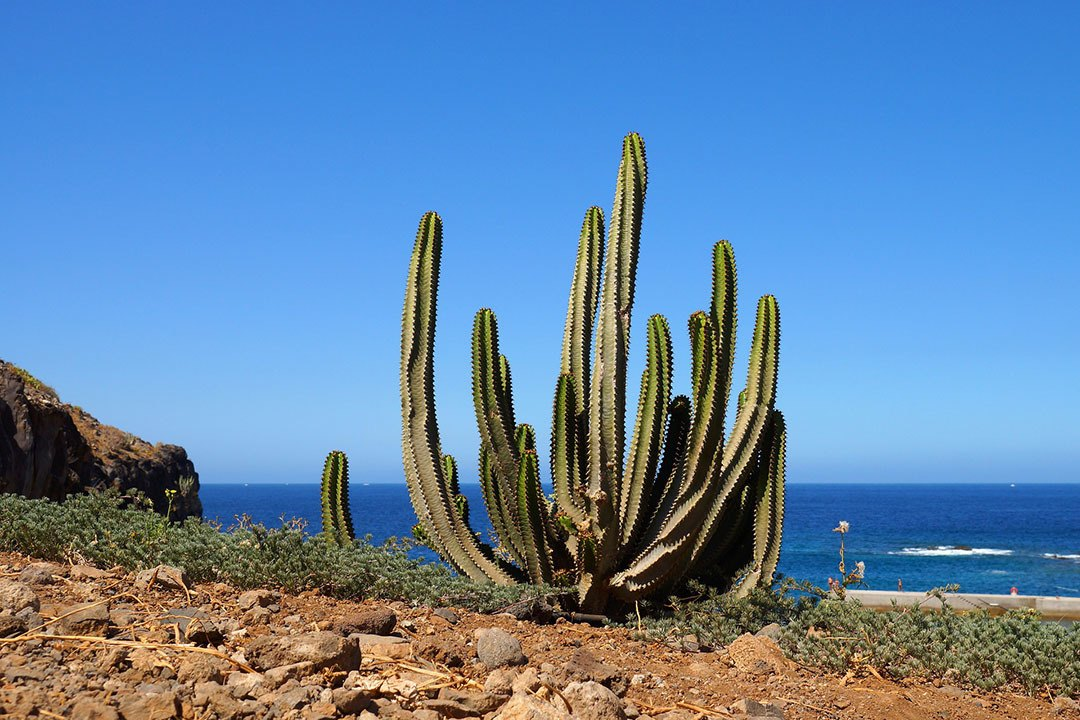 7 Reasons to put Tenerife on your bucket list - vegetacion