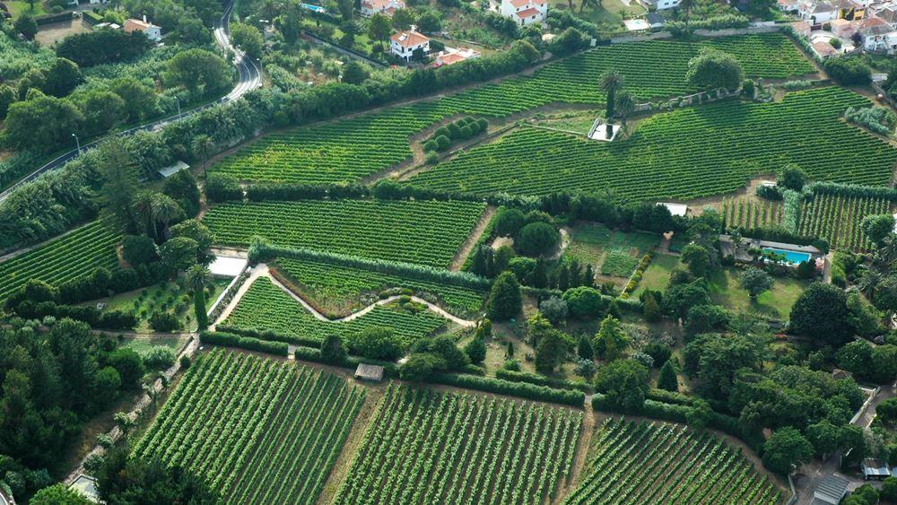 beautiful family-run vineyard