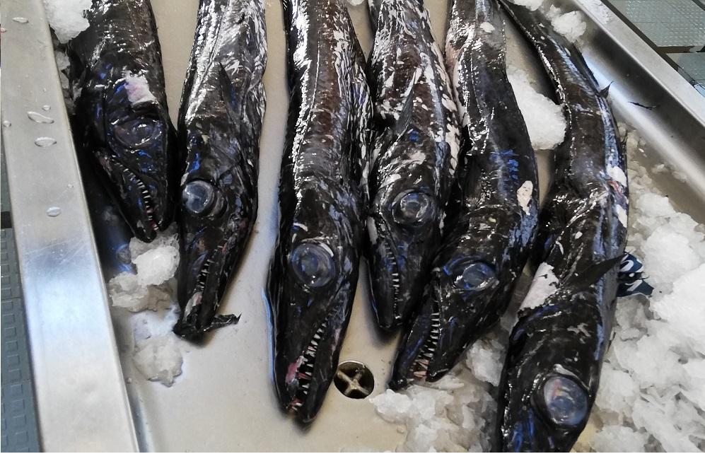 Scabbard fish